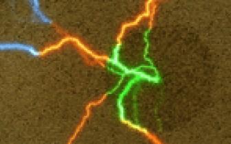 לאור החשמל